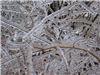 Freezing Rain Covered Branches